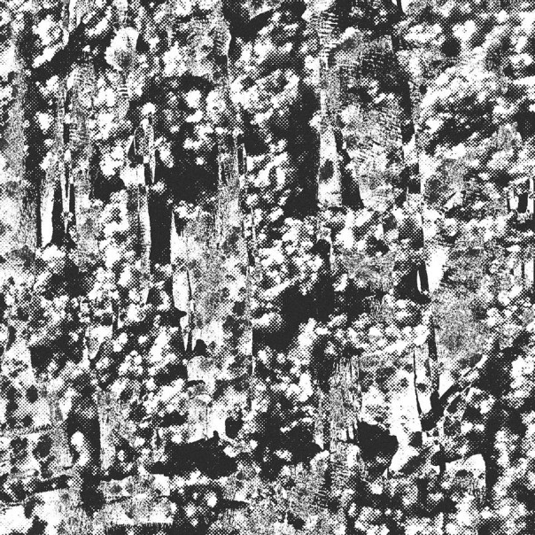 Perspex Flesh - Ordered Image