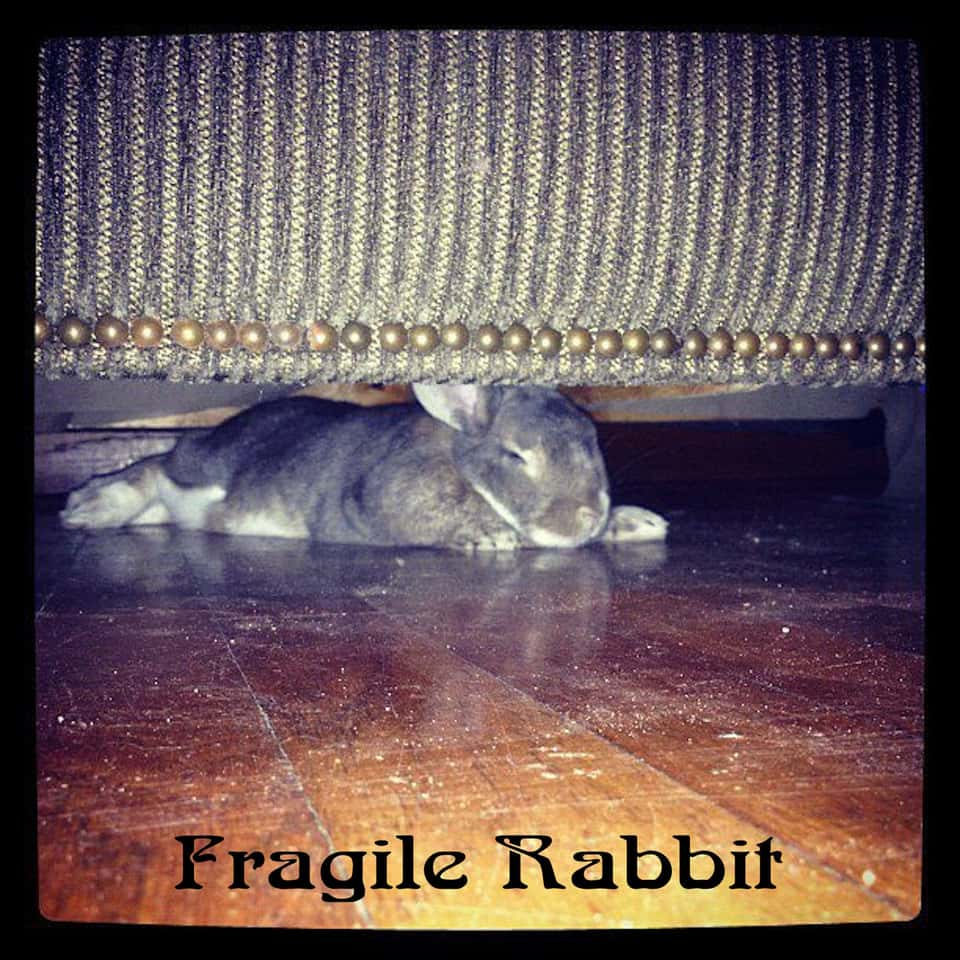 Fragile Rabbit - Fragile Rabbit